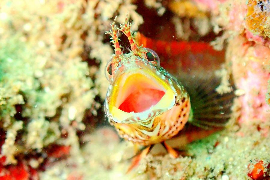 鳥取の海で「ダイビングライセンス取得」